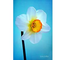 Daffodil Portrait Photographic Print