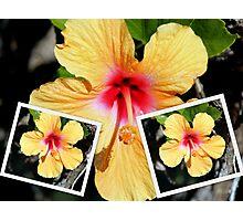 Collage of a Single Orange Hibiscus Flower Photographic Print