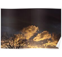Sunset and the Hickory Tree Poster