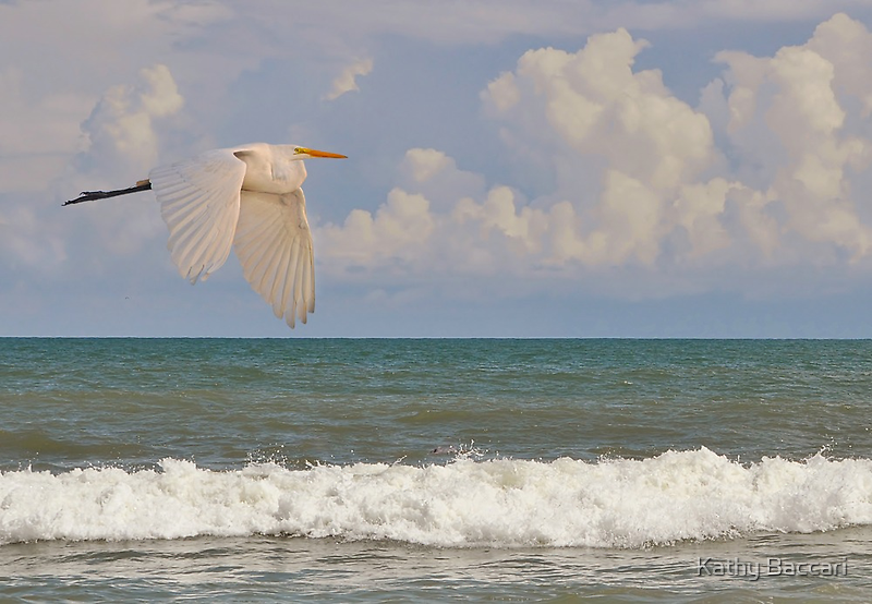 The Great Egret & The Ocean by Kathy Baccari