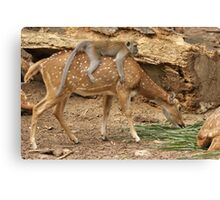 Who Adopted Who Canvas Print