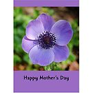 Happy Mother's Day Anemone by Gillian Cross