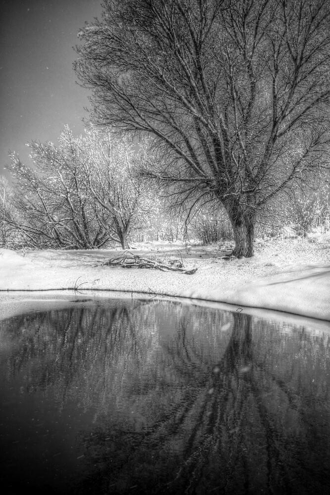 Pond-er by Bob Larson