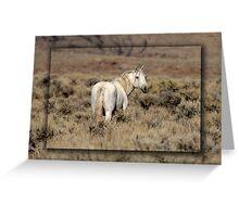 Lone White Stallion Greeting Card