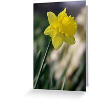 Daffodil 1 Greeting Card