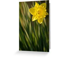 Daffodil 2 Greeting Card