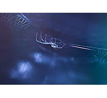 Cold Spider  Photographic Print