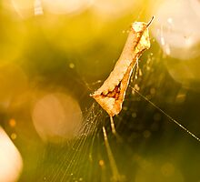 Crispy web  by Nina  Matthews Photography