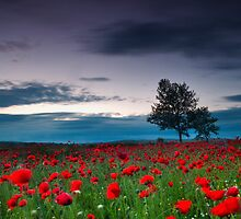 Red Hoods by Evgeni Dinev