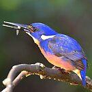 """ Azure Kingfisher "" Marlo Vic. by helmutk"