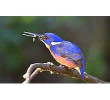 """ Azure Kingfisher "" Marlo Vic. Photographic Print"