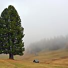 One tree with two stems in the mist by Arie Koene