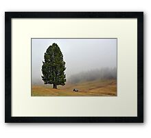 One tree with two stems in the mist Framed Print