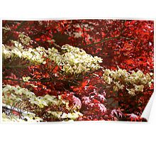 Dogwoods amidst Red Japanese! Poster