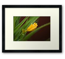 Growth in Action Framed Print