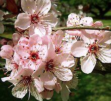 Spring Cluster by chrstnes73