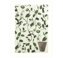 Hoya Carnosa / Porcelainflower Art Print