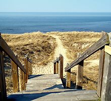 The Walk to the Beach by BarbL
