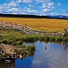 Fence, Pond by Bryan D. Spellman