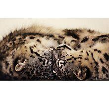 Snow Leopard Cubs Photographic Print