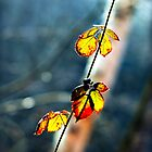 Birch & Leaves by WillOakley