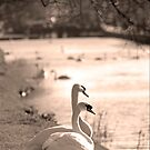 Two swans at Dublin canal  by Esther  Moliné