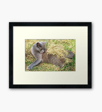 Which Way Did It Go? Framed Print