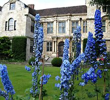 DELPHINIUMS IN YORK by gothgirl