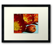 Blooming beauty - Clivia Framed Print