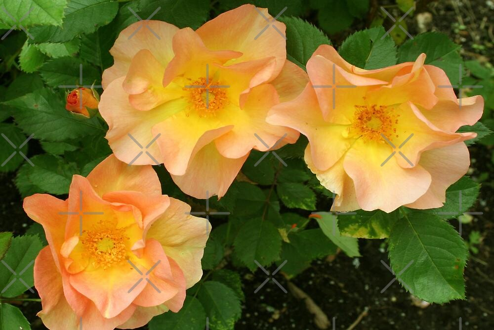 Goodbye England's Rose (Candle In the Wind) by Vickie Emms