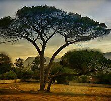 The Tree by Johanna26