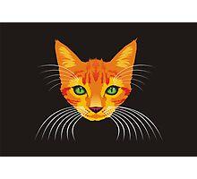 orange cat tee Photographic Print