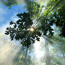 The Forest Star by NatureGreeting Cards ©ccwri