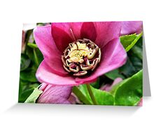 Purple Pleasure Greeting Card