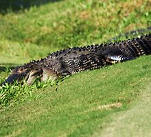 let sleeping 'gators lie.. by FotoBloke