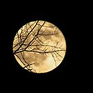 Shadows on the Moon by Nevermind the Camera Photography