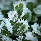 Frost Fingers by Gillian Cross
