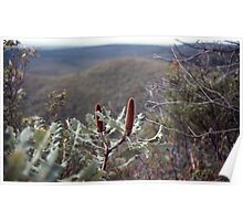 On Bluff Knoll Stirling Ranges 19820830 0035 Poster