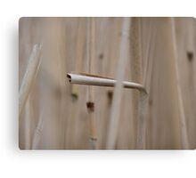 cane versus crane Canvas Print