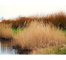 watery willow  Photographic Print