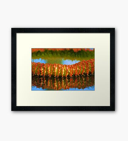 Amazon Water Lily Pad Framed Print