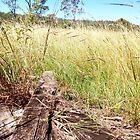An Australian Autumn Day by BekJoy