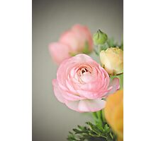 One Pink Ranunculus Photographic Print