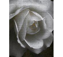 Heart Rose Photographic Print