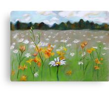 Camomile field. Canvas Print