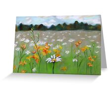 Camomile field. Greeting Card
