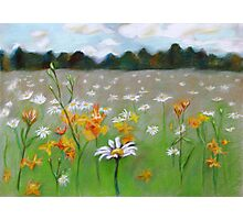 Camomile field. Photographic Print