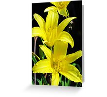 Daffodil Tendrils Greeting Card