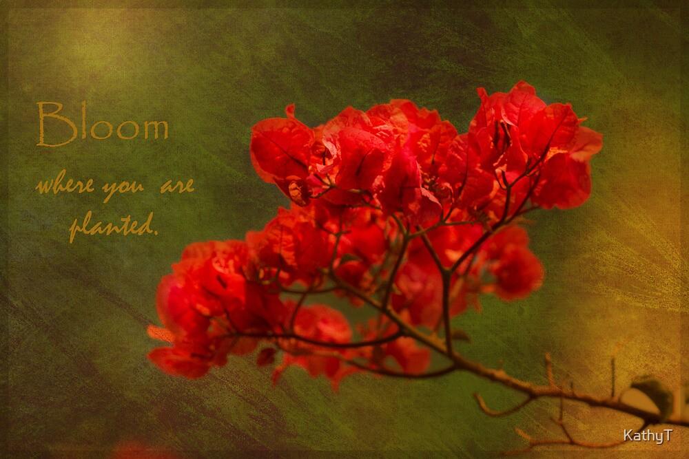 Bouganvillea Bloom by KathyT
