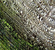 Mossy stump by sarahtakespics